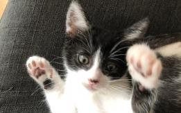 Chats à donner